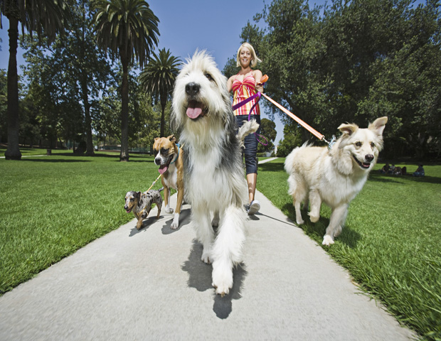 Dog walking or pet care service     If you love animals, starting a dog walking or pet care business could be worthwhile.