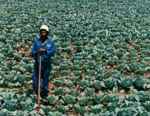 Black Farmers to Receive Payouts in $1.2 Billion from Federal Lawsuit