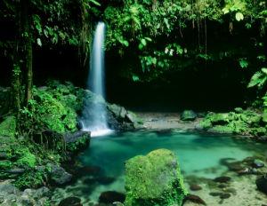 dominica nature island