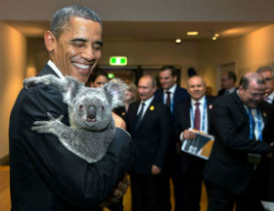 President Obama holding a koala before the G20 in Brisbane, Queensland, Australia, Nov. 15, 2014