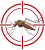 mosquito - Zika Virus