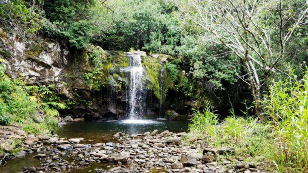 Scenic rainforest tour