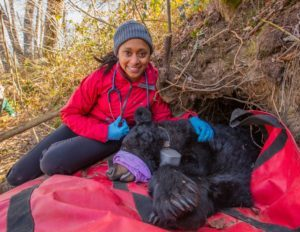 This Ecologist Is Not Afraid of Bears—She Traps Them for Research